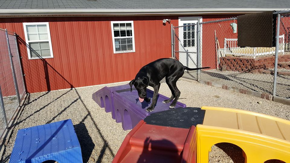 Home red barn pet resort for Red barn dog kennel